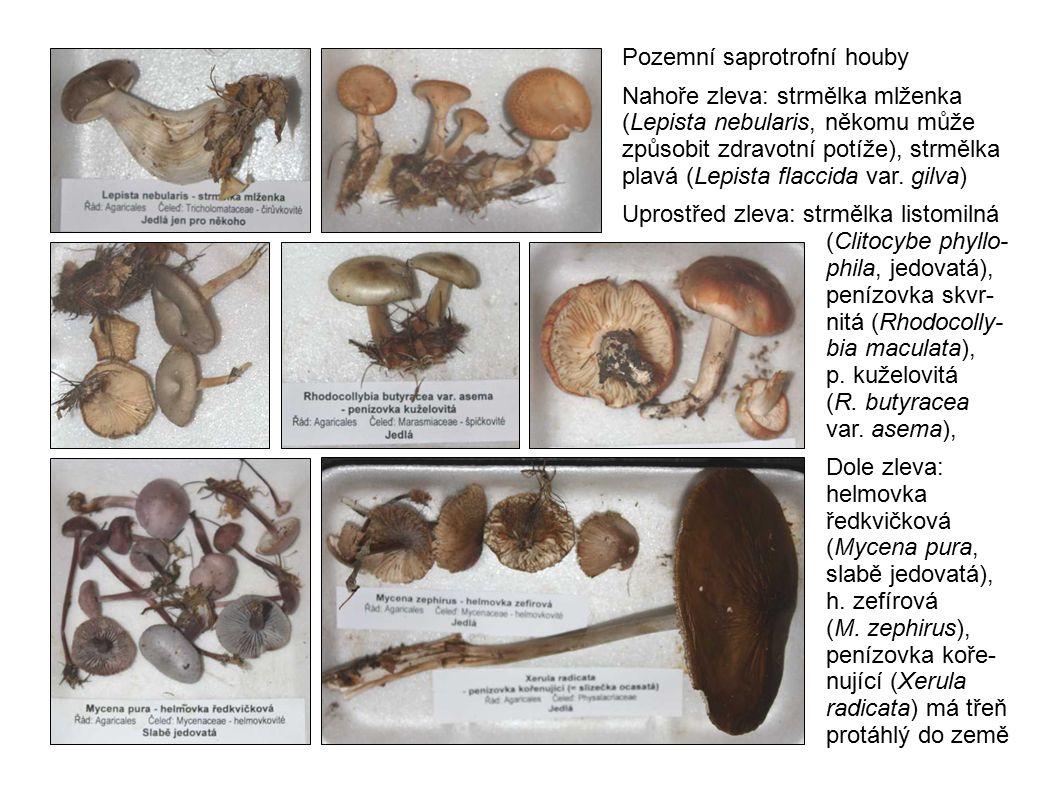 Pozemní saprotrofní houby