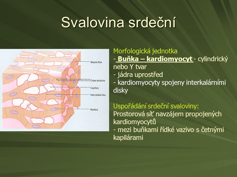 Svalovina srdeční Morfologická jednotka