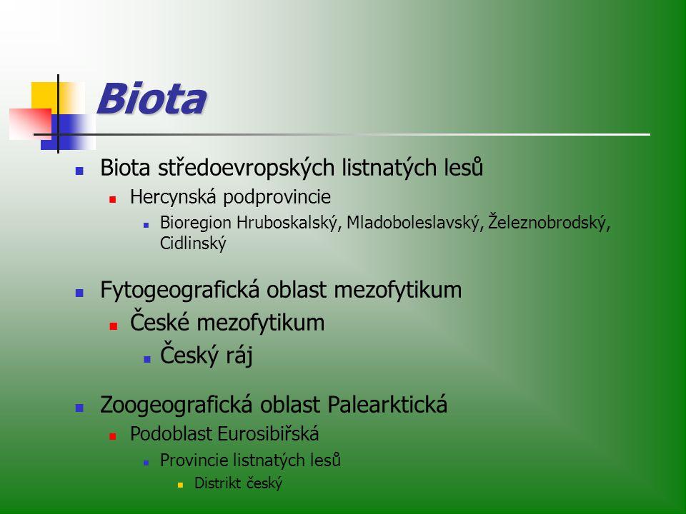 Biota Biota středoevropských listnatých lesů