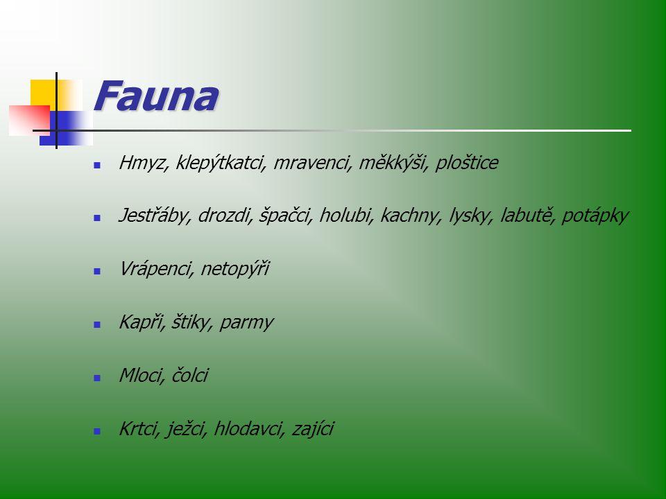 Fauna Hmyz, klepýtkatci, mravenci, měkkýši, ploštice