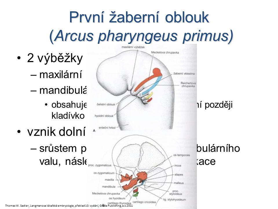 První žaberní oblouk (Arcus pharyngeus primus)