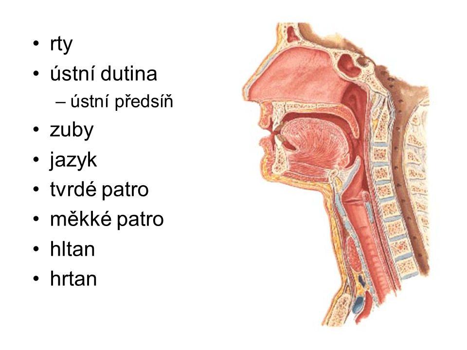 rty ústní dutina zuby jazyk tvrdé patro měkké patro hltan hrtan