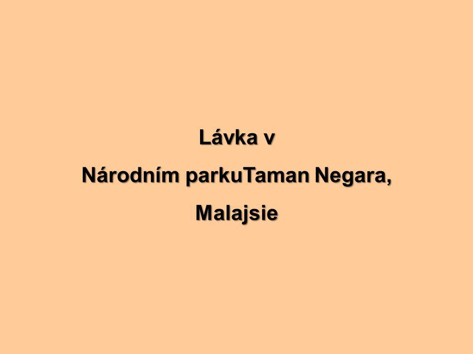 Národním parkuTaman Negara,