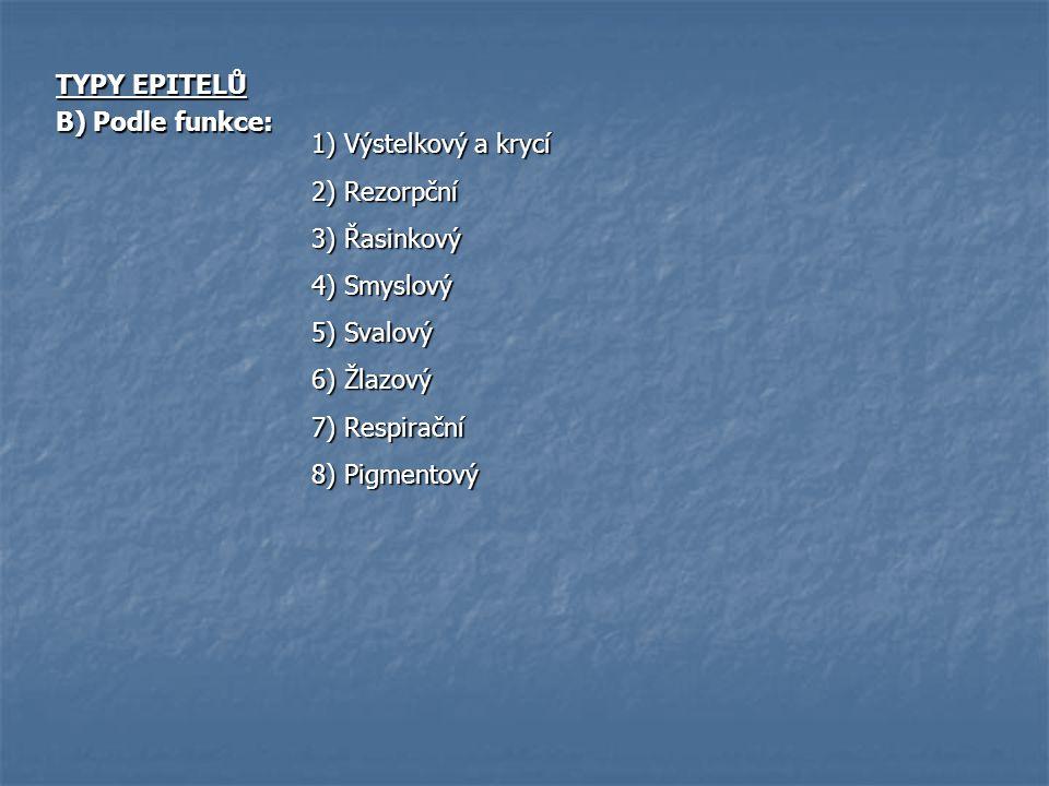 TYPY EPITELŮ B) Podle funkce: 1) Výstelkový a krycí. 2) Rezorpční. 3) Řasinkový. 4) Smyslový. 5) Svalový.
