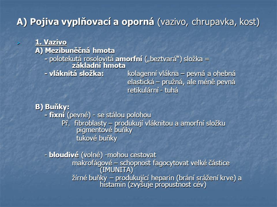A) Pojiva vyplňovací a oporná (vazivo, chrupavka, kost)