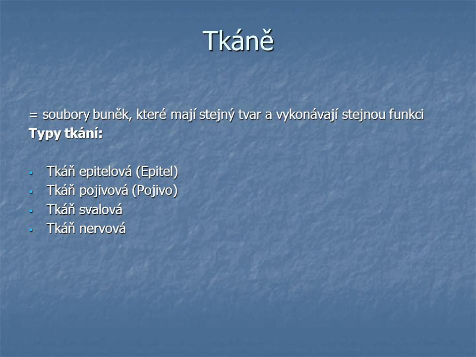 Tkáně = soubory buněk, které mají stejný tvar a vykonávají stejnou funkci. Typy tkání: Tkáň epitelová (Epitel)