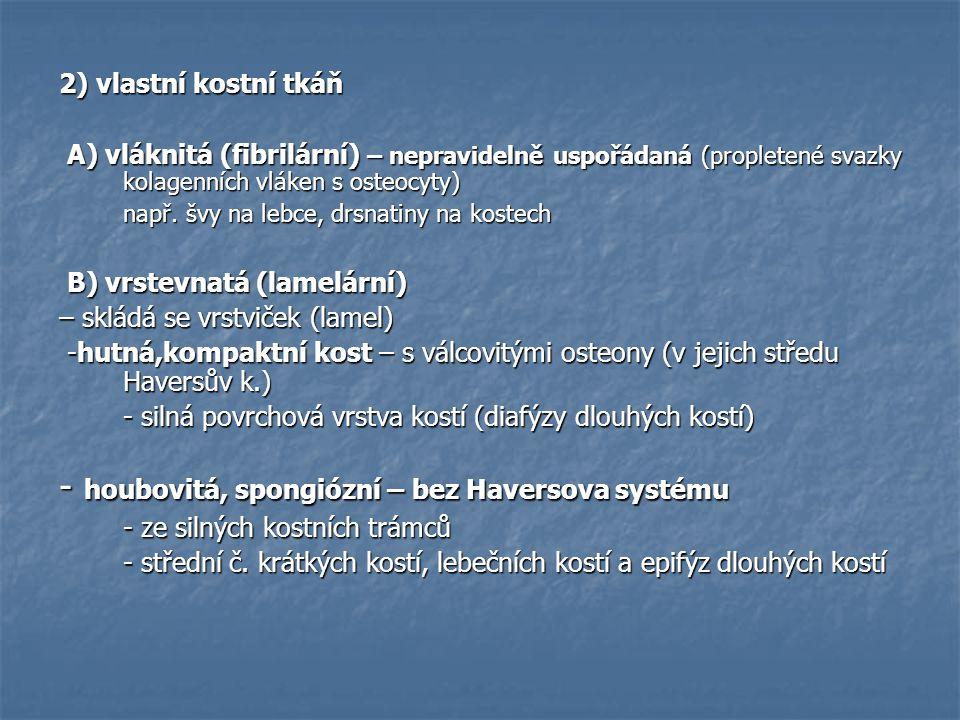 - houbovitá, spongiózní – bez Haversova systému