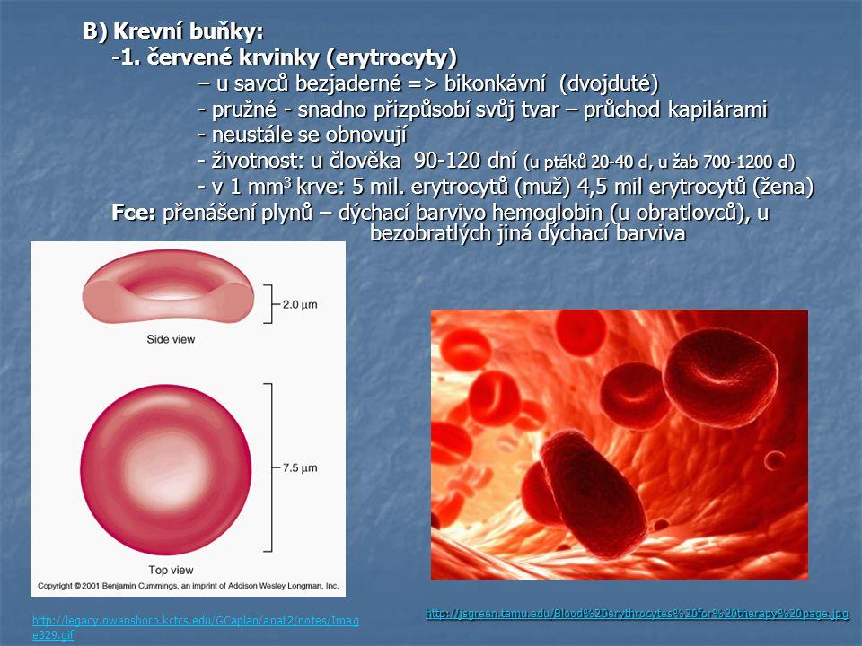 -1. červené krvinky (erytrocyty)