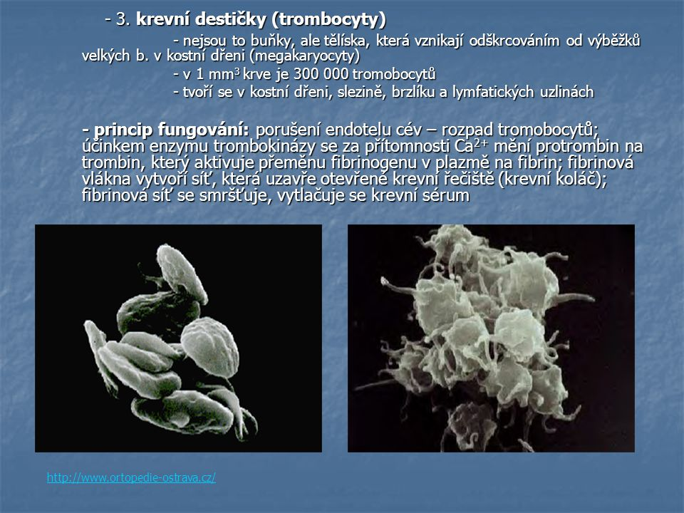 - 3. krevní destičky (trombocyty)