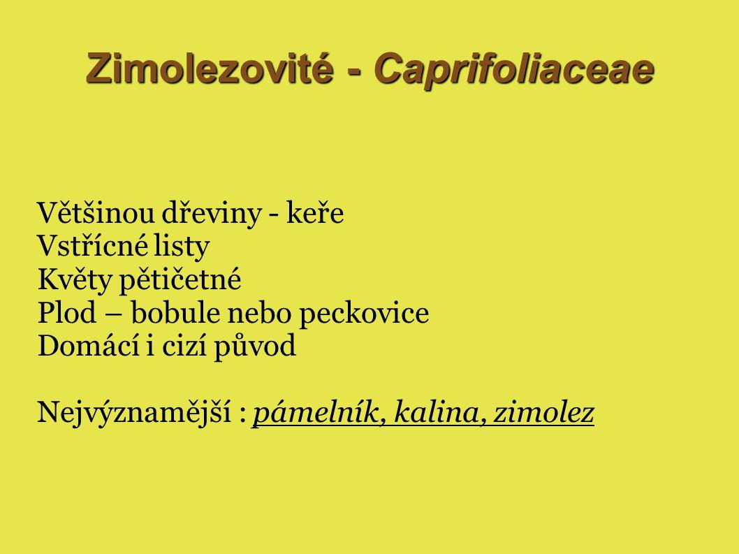 Zimolezovité - Caprifoliaceae