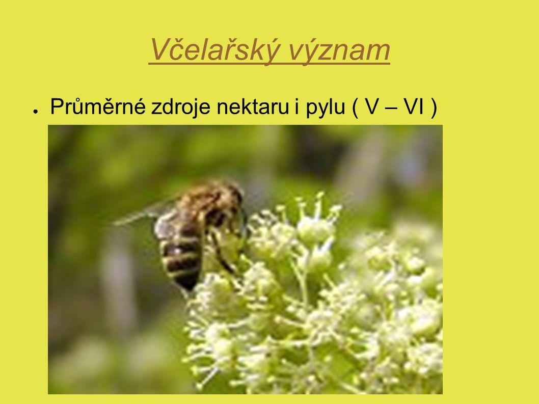 Včelařský význam Průměrné zdroje nektaru i pylu ( V – VI )