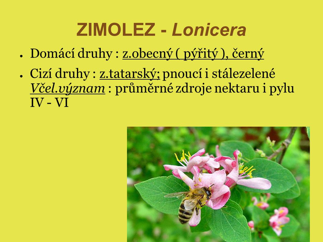 ZIMOLEZ - Lonicera Domácí druhy : z.obecný ( pýřitý ), černý