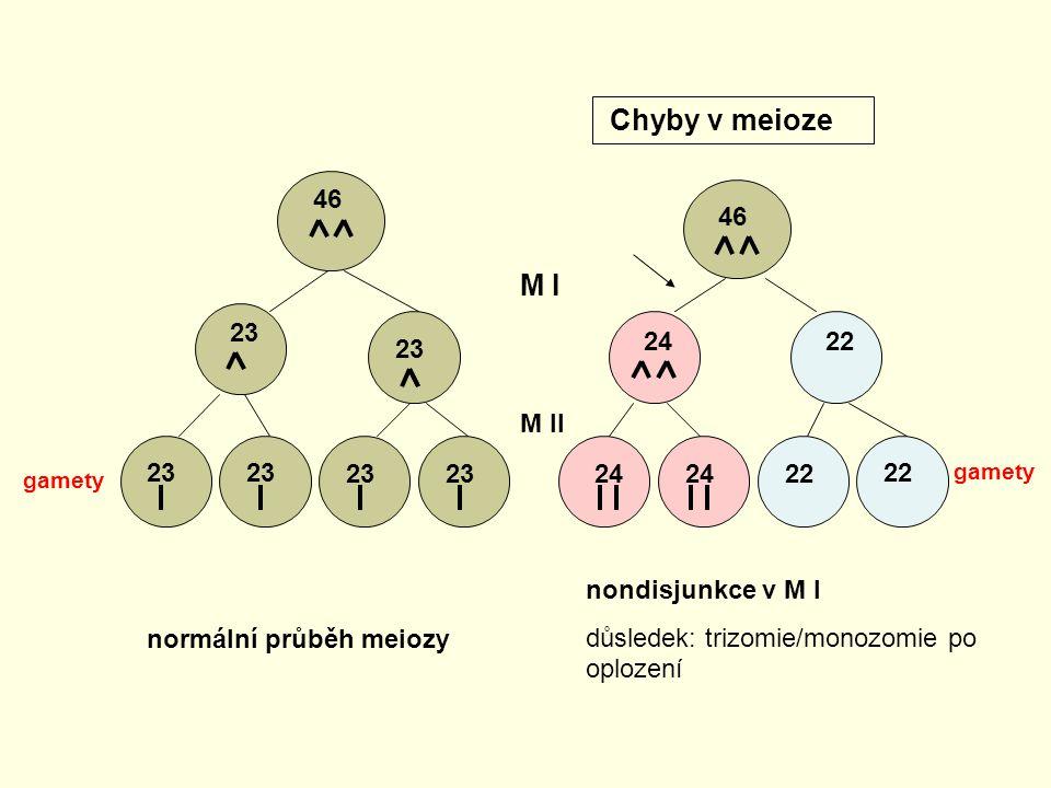 Chyby v meioze M I 46 23 24 22 M II normální průběh meiozy