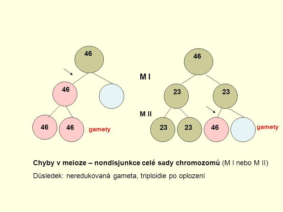 46 46. M I. 46. 23. 23. M II. 46. 46. 23. 23. 46. gamety. gamety. Chyby v meioze – nondisjunkce celé sady chromozomů (M I nebo M II)