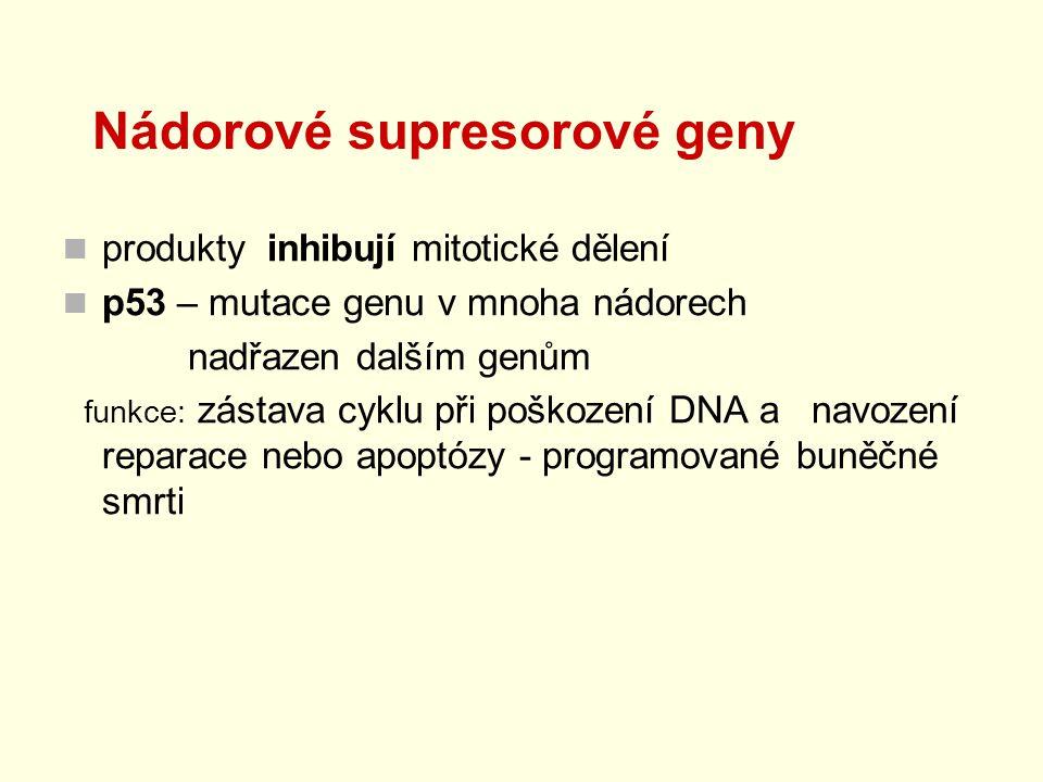 Nádorové supresorové geny