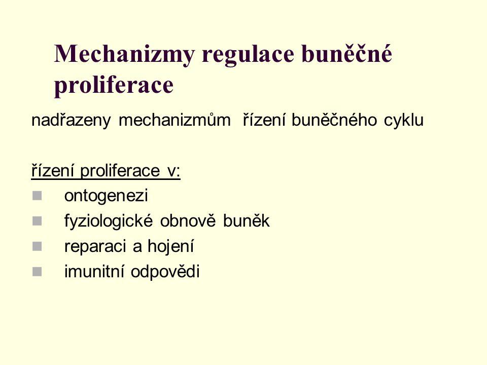 Mechanizmy regulace buněčné proliferace