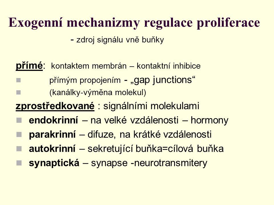 Exogenní mechanizmy regulace proliferace