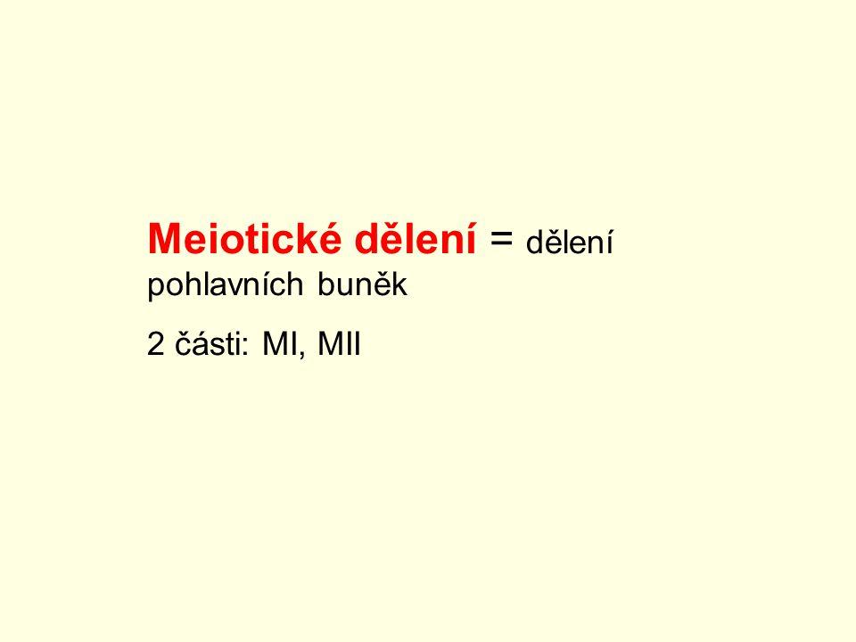 Meiotické dělení = dělení pohlavních buněk