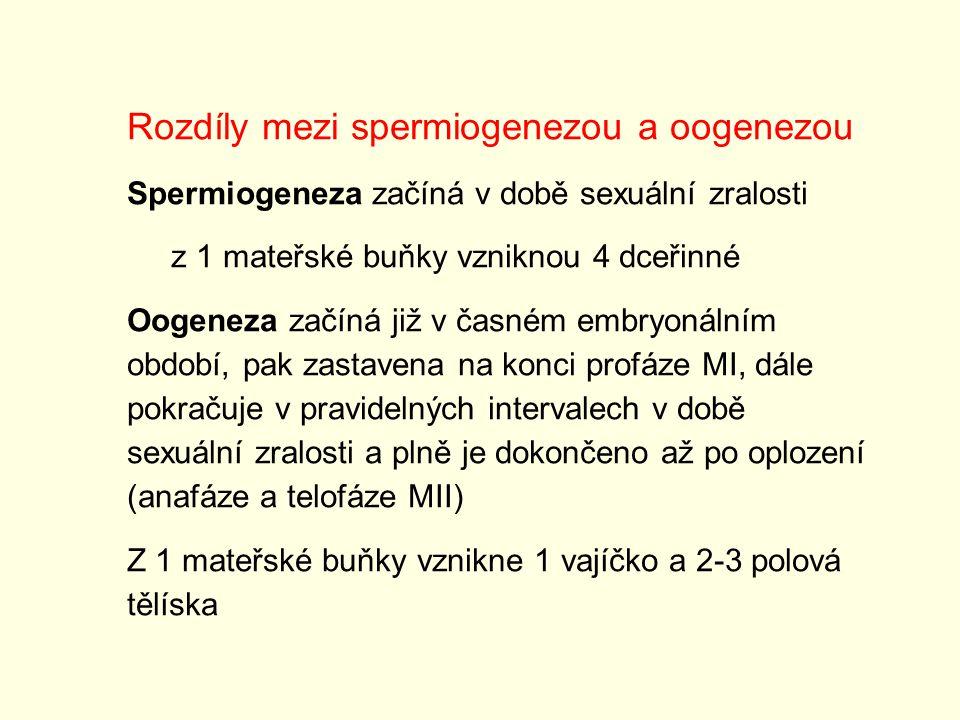 Rozdíly mezi spermiogenezou a oogenezou