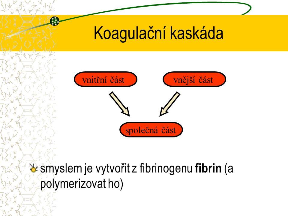 Koagulační kaskáda vnitřní část. vnější část. společná část.
