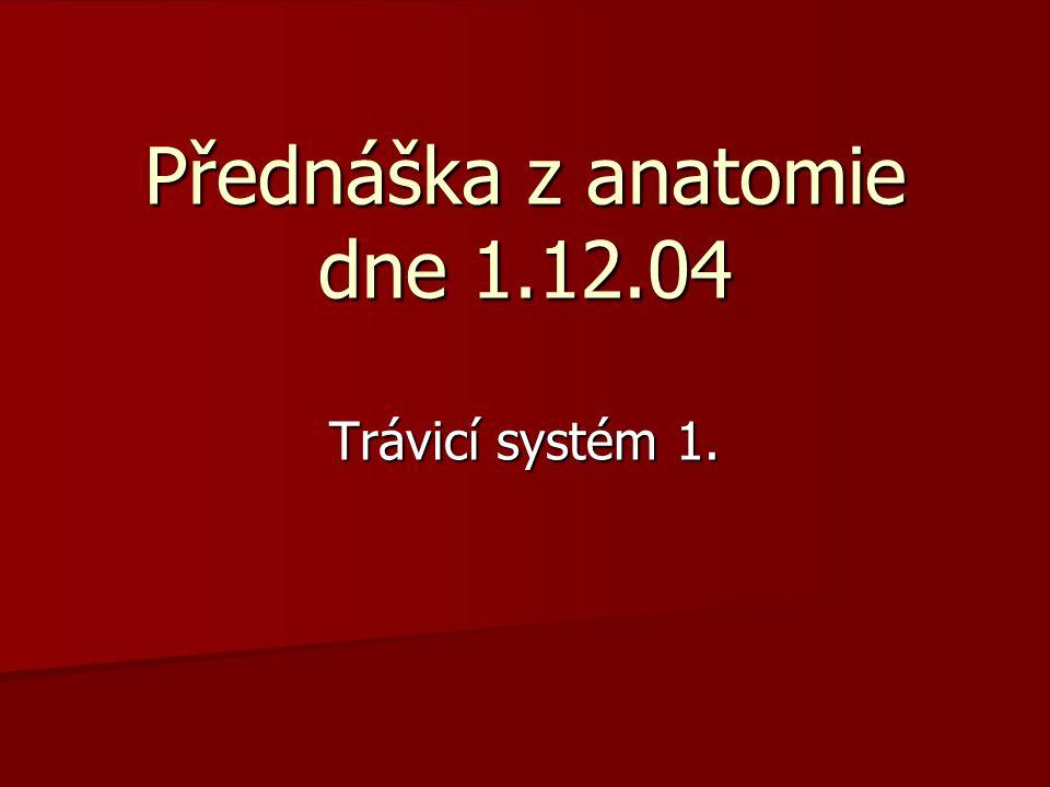 Přednáška z anatomie dne 1.12.04