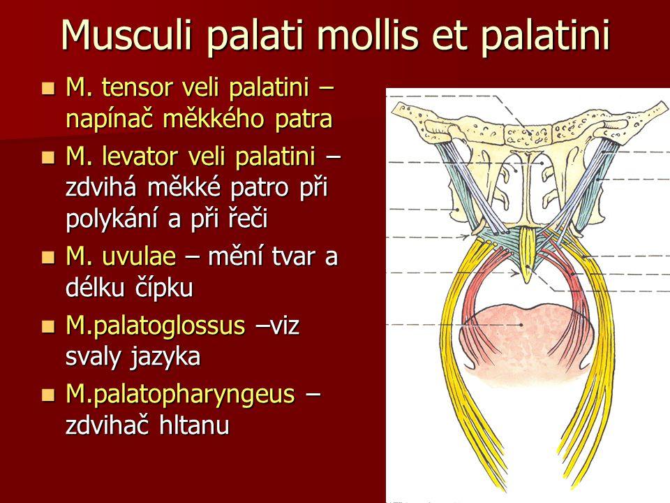 Musculi palati mollis et palatini
