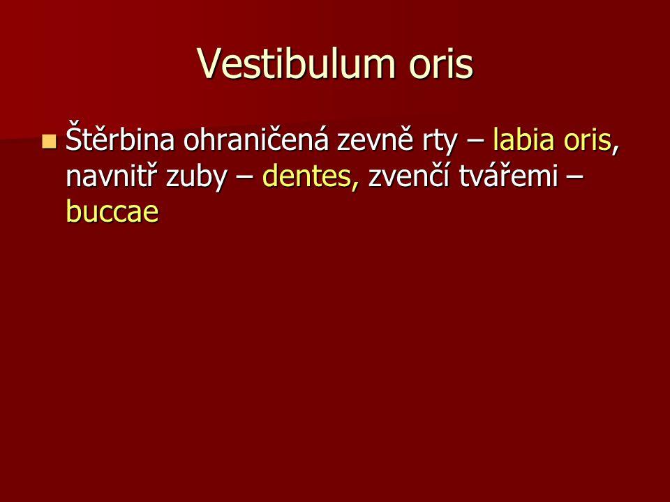 Vestibulum oris Štěrbina ohraničená zevně rty – labia oris, navnitř zuby – dentes, zvenčí tvářemi – buccae.