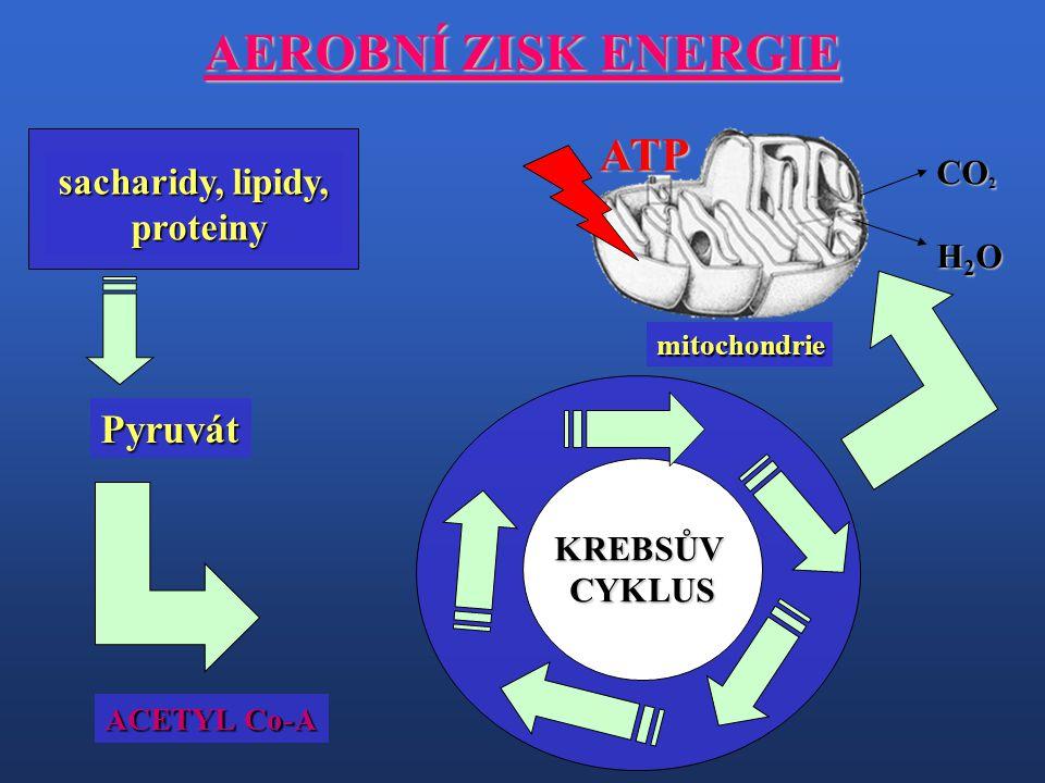AEROBNÍ ZISK ENERGIE ATP Pyruvát sacharidy, lipidy, proteiny CO2 H2O
