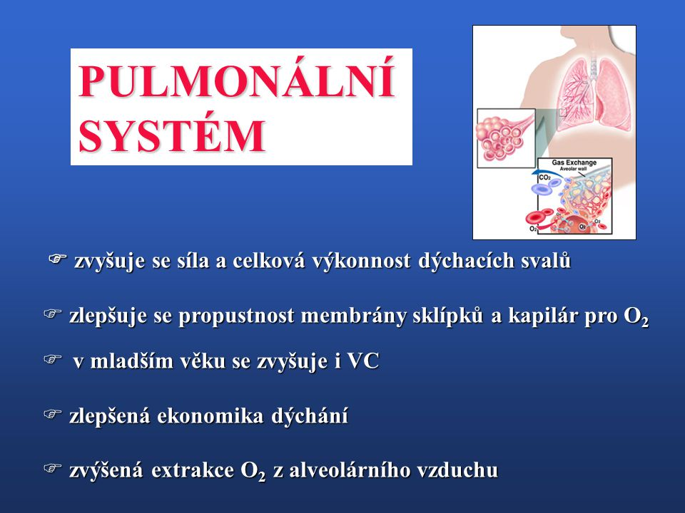 PULMONÁLNÍ SYSTÉM.  zvyšuje se síla a celková výkonnost dýchacích svalů. zlepšuje se propustnost membrány sklípků a kapilár pro O2.