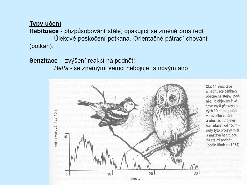 Typy učení Habituace - přizpůsobování stálé, opakující se změně prostředí. Úlekové poskočení potkana. Orientačně-pátrací chování (potkan).
