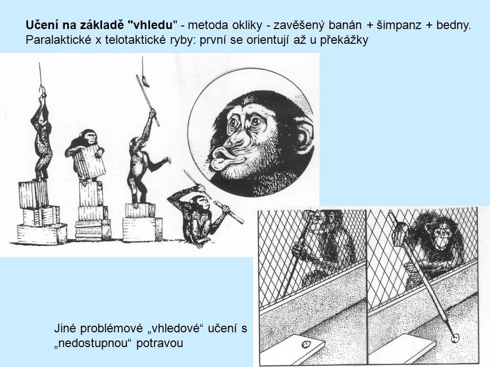 Učení na základě vhledu - metoda okliky - zavěšený banán + šimpanz + bedny.