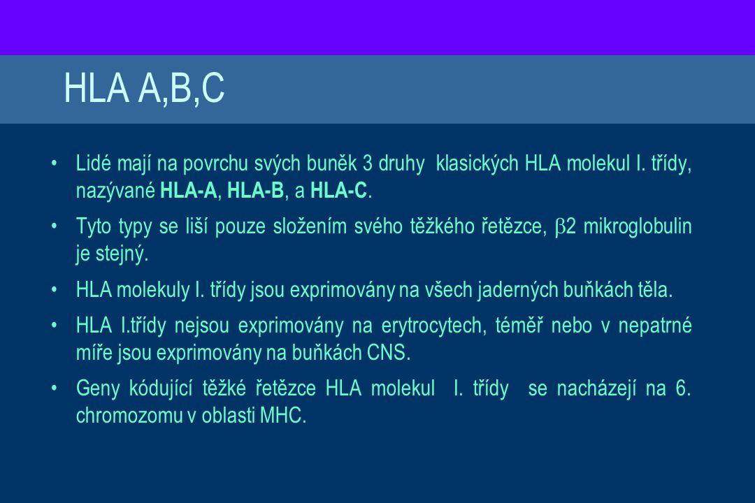 HLA A,B,C Lidé mají na povrchu svých buněk 3 druhy klasických HLA molekul I. třídy, nazývané HLA-A, HLA-B, a HLA-C.