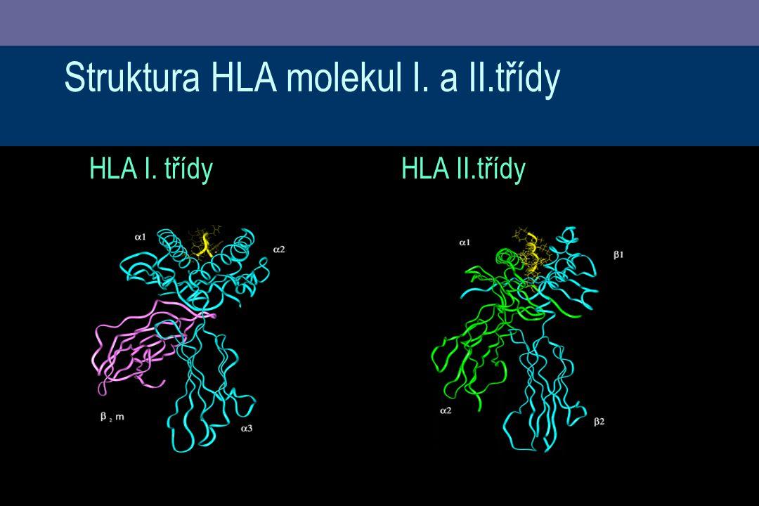Struktura HLA molekul I. a II.třídy