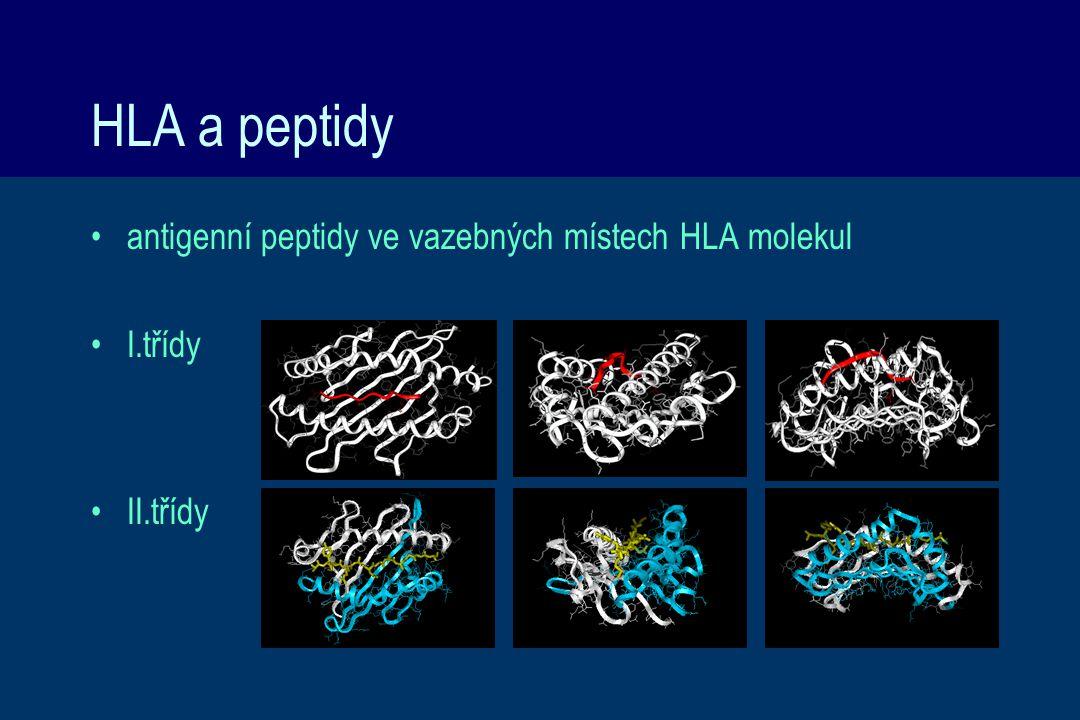 HLA a peptidy antigenní peptidy ve vazebných místech HLA molekul