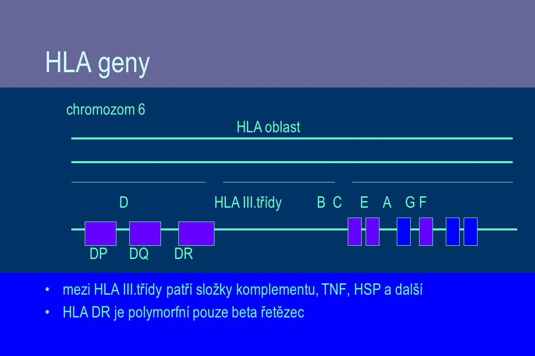 HLA geny chromozom 6 HLA oblast D HLA III.třídy B C E A G F DP DQ DR