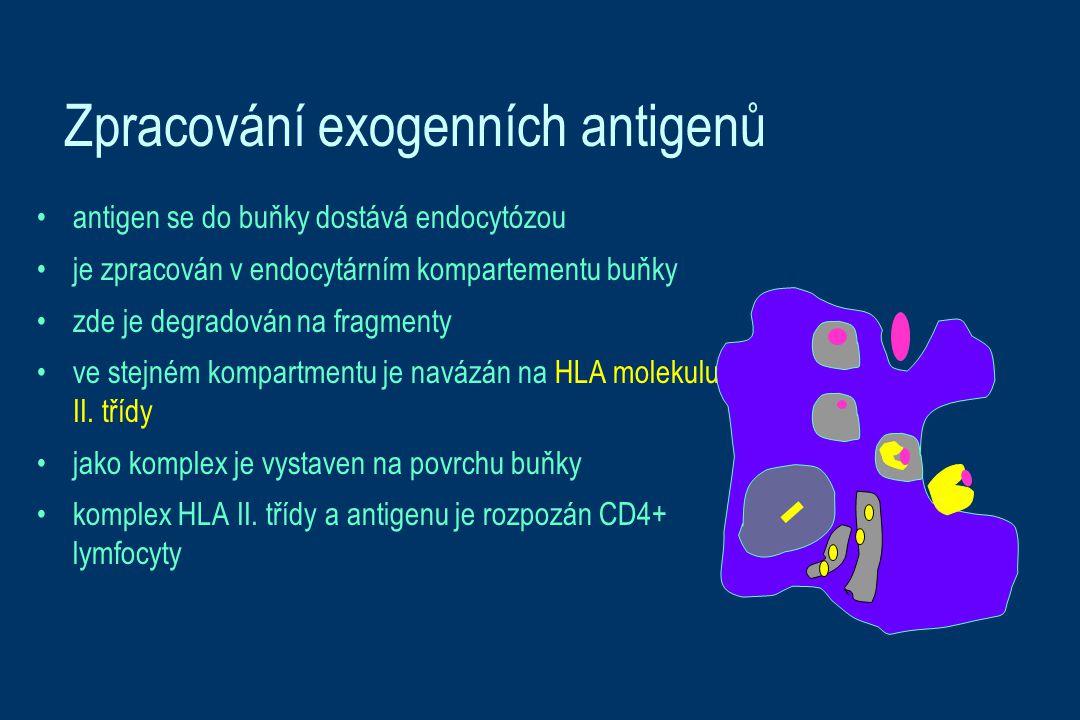 Zpracování exogenních antigenů
