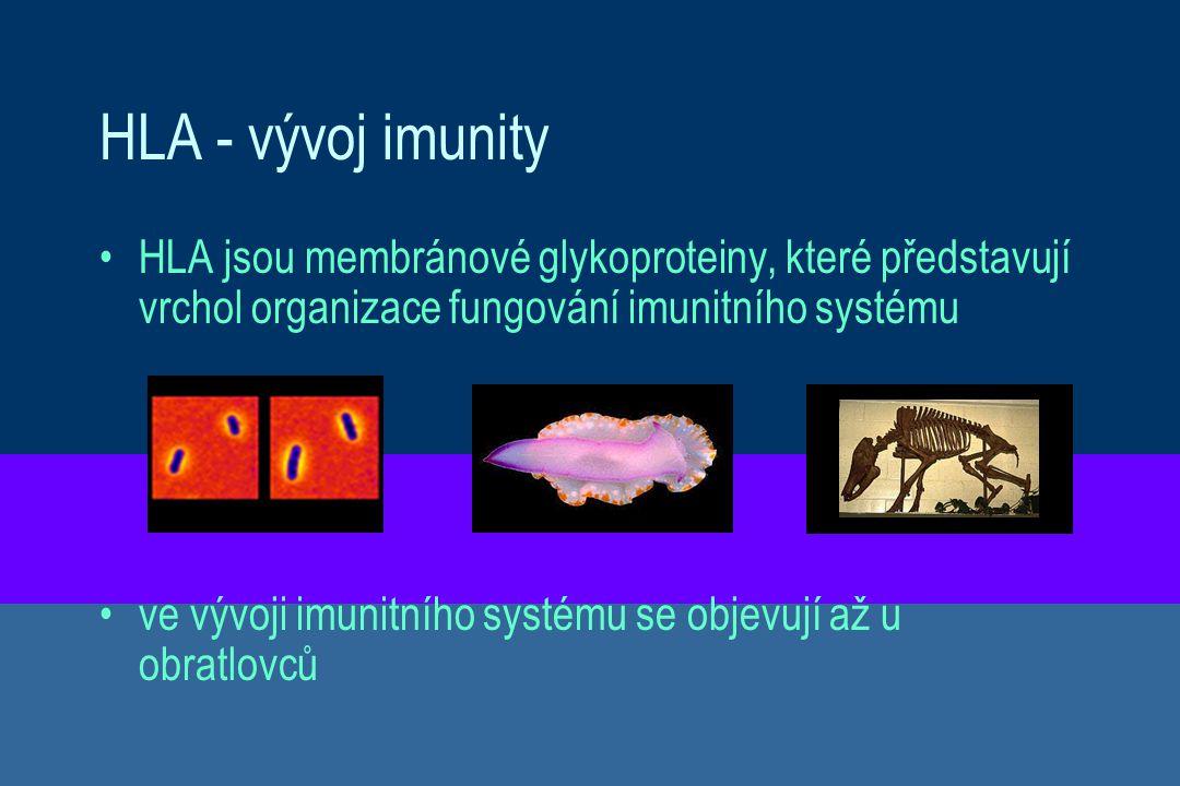 HLA - vývoj imunity HLA jsou membránové glykoproteiny, které představují vrchol organizace fungování imunitního systému.