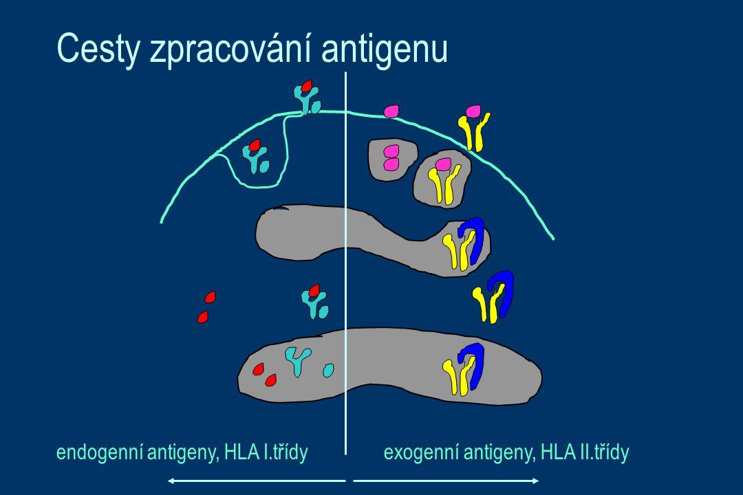 Cesty zpracování antigenu