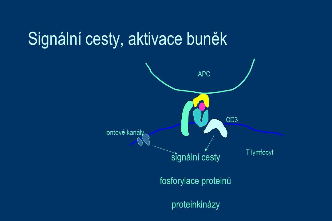 Signální cesty, aktivace buněk