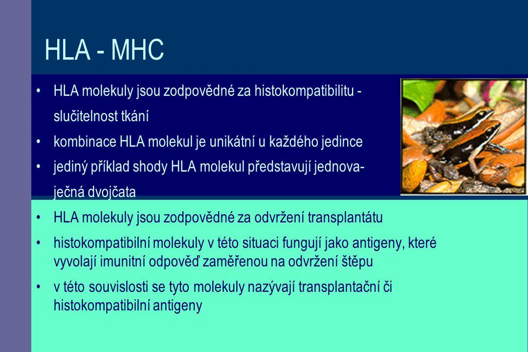 HLA - MHC HLA molekuly jsou zodpovědné za histokompatibilitu -