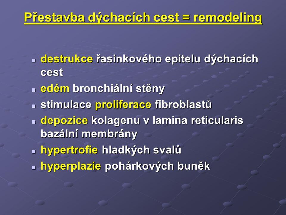 Přestavba dýchacích cest = remodeling