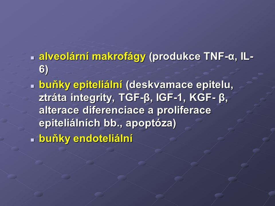 alveolární makrofágy (produkce TNF-α, IL-6)