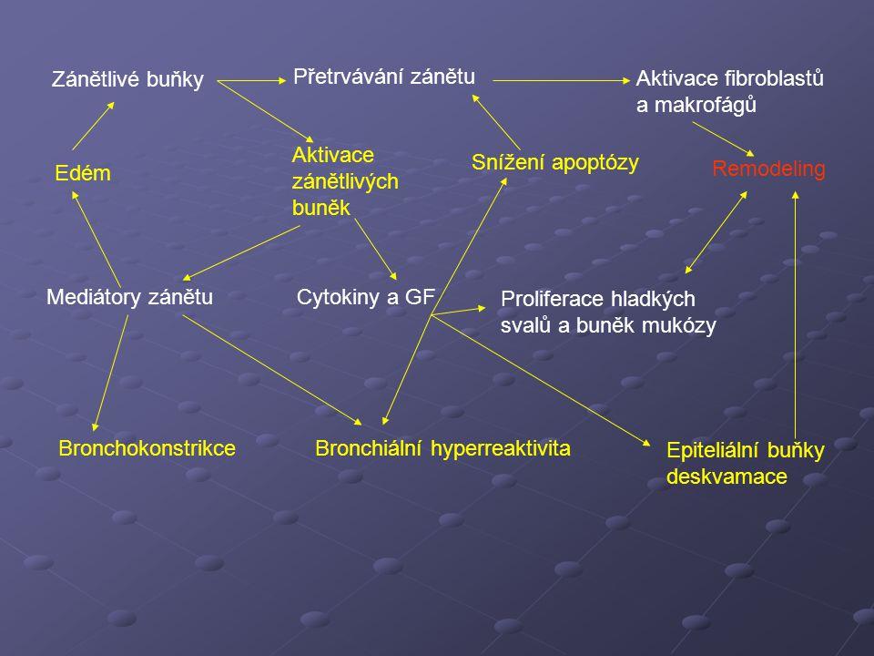 Zánětlivé buňky Přetrvávání zánětu. Aktivace fibroblastů a makrofágů. Aktivace zánětlivých buněk.