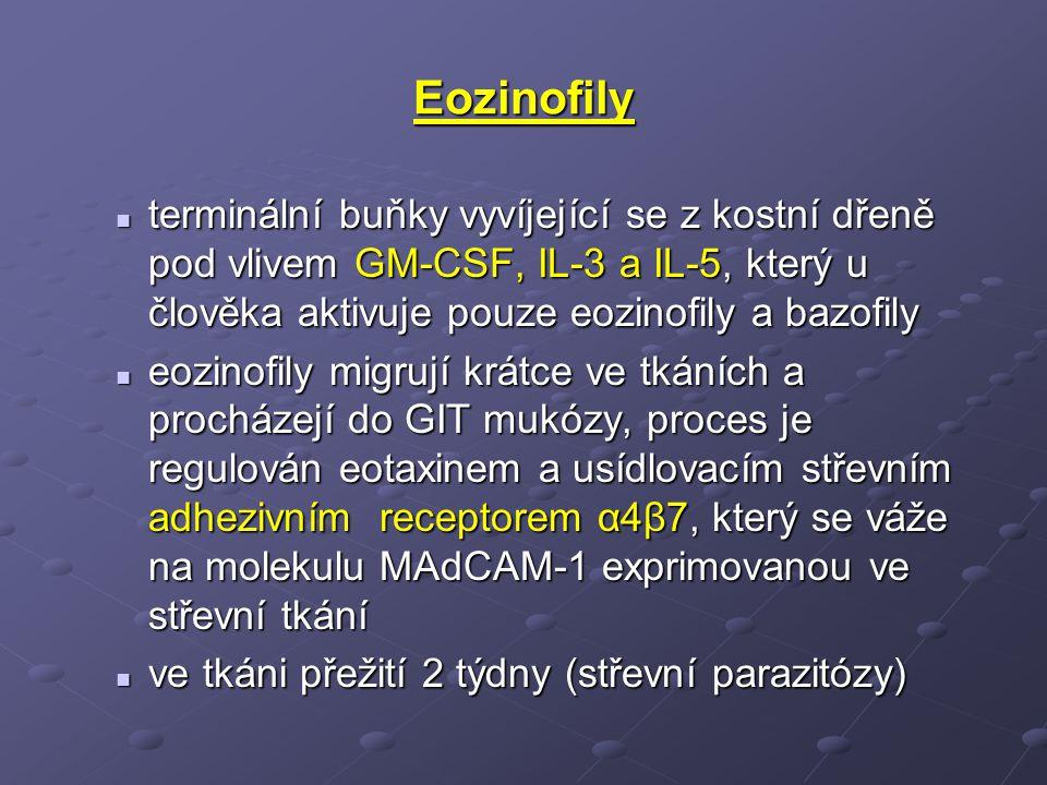 Eozinofily terminální buňky vyvíjející se z kostní dřeně pod vlivem GM-CSF, IL-3 a IL-5, který u člověka aktivuje pouze eozinofily a bazofily.