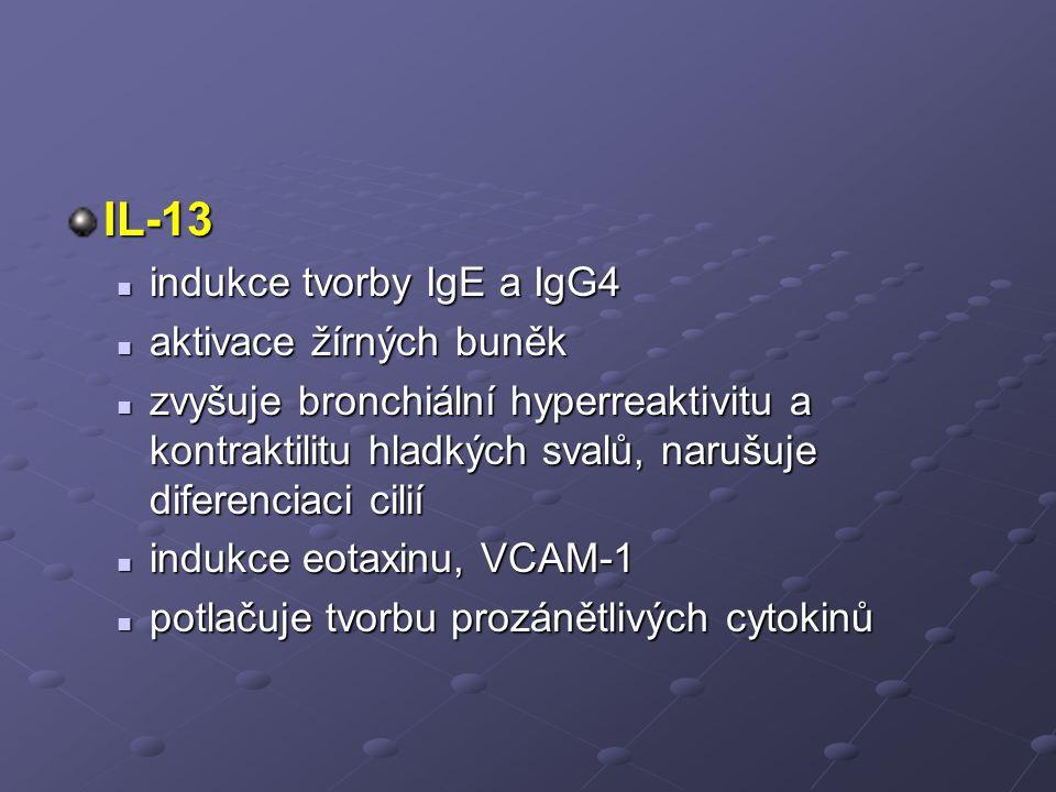 IL-13 indukce tvorby IgE a IgG4 aktivace žírných buněk