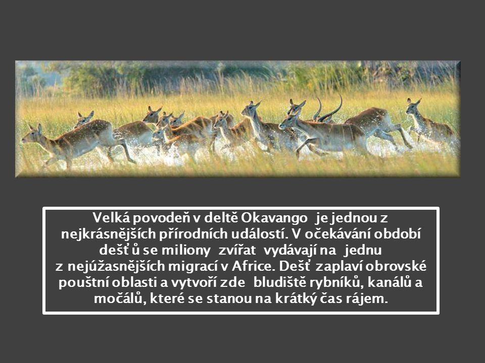 Velká povodeň v deltě Okavango je jednou z nejkrásnějších přírodních událostí. V očekávání období dešťů se miliony zvířat vydávají na jednu z nejúžasnějších migrací v Africe. Dešť zaplaví obrovské pouštní oblasti a vytvoří zde bludiště rybníků, kanálů a močálů, které se stanou na krátký čas rájem.