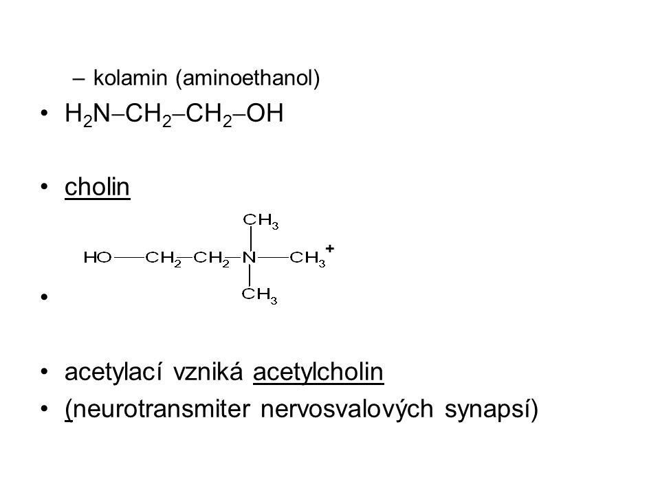 acetylací vzniká acetylcholin (neurotransmiter nervosvalových synapsí)