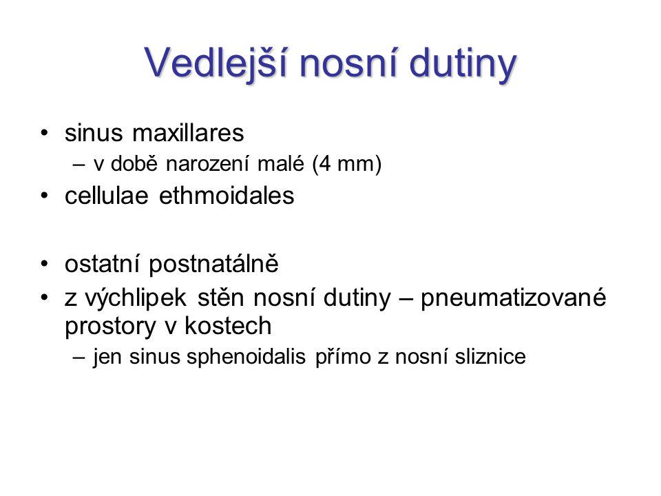 Vedlejší nosní dutiny sinus maxillares cellulae ethmoidales