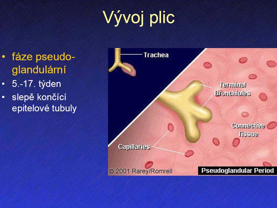Vývoj plic I. vrůstání do splanchnického mezodermu a vyklenování do pleuroperitoneáního kanálu. pseudoglandulární stadium.