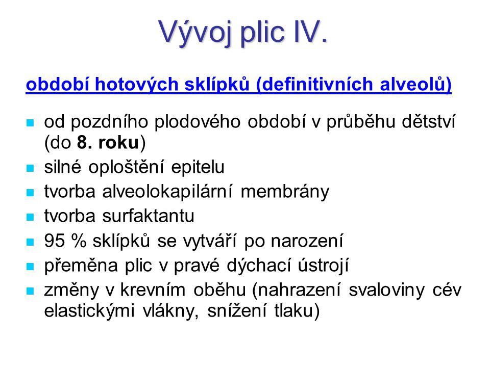 Vývoj plic IV. období hotových sklípků (definitivních alveolů)